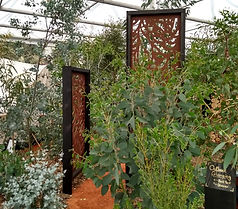 Hardy Eucalyptus show stand Chelsea screen