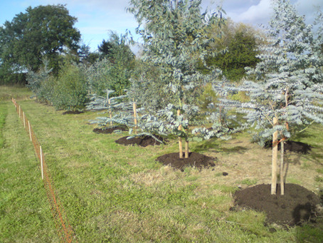 Example Cut Foliage Plantation