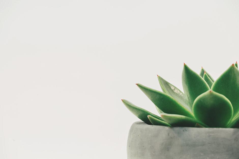 Canva - Succulent Plant on Gray Plant Po