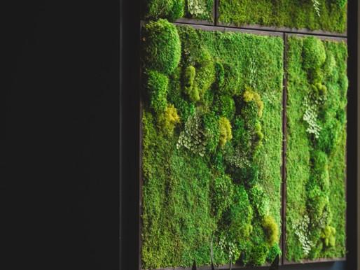 Las w mieszkaniu. Mech na ścianie.