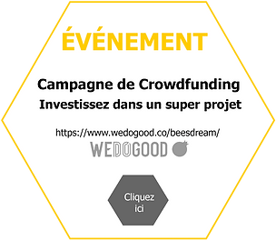 210527_Annonce_Invest_WDG_SiteWeb_BD.png