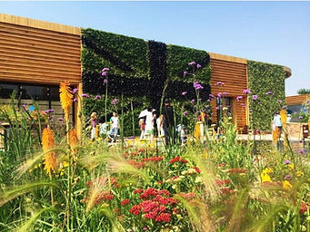 BHE UK Garden Biodiversity Meadow 1.jpg
