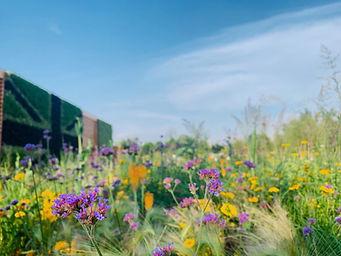 BHE UK Garden Biodiversity 3.jpeg