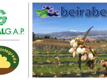 Certificações Beiraberry: Global G.A.P. e PRODI