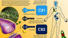 WHAT IS CBD & MORE?