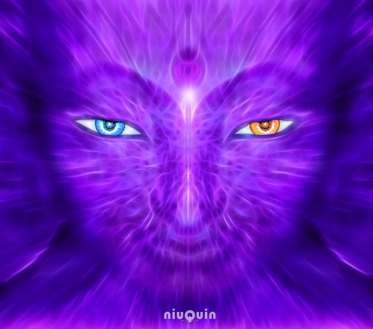 niuQuin - DelSerLuz violet