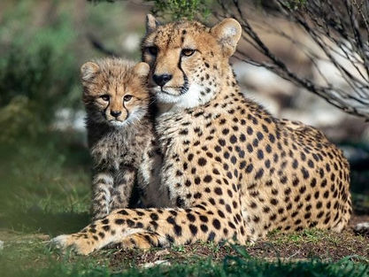 leapard cub3_edited.jpg