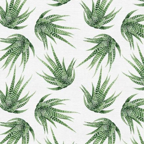 Modern Botanicals GREEN HAWORTHIA