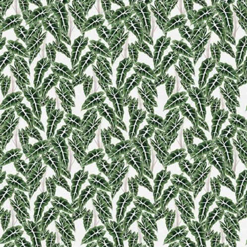 Modern Botanicals GREEN ALOCASIA
