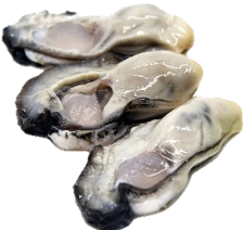 Oyster Meats, 1kg/bag 굴 生蠔肉
