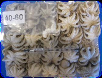 Baby Octopus, 1kg 쭈꾸미 章魚仔