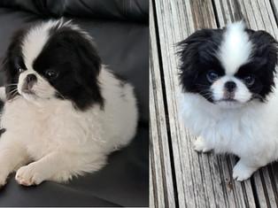 Marc en Alan adopteren Jun - 2 maanden later