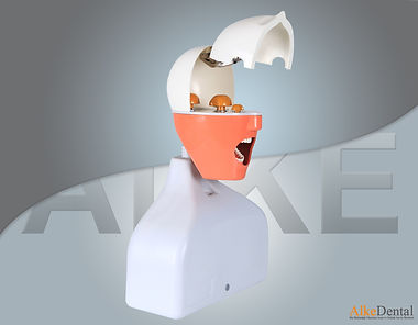 dental simulation manniquin2.jpg