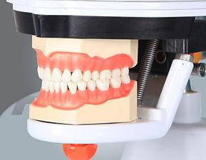 dental simulation manniquin23.jpg