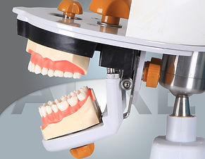 dental simulation manniquin13.jpg