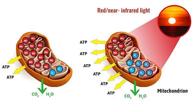 Red Light Therapy Graphic.jpg