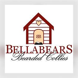 Bearded Collie, Beraded Collie Deutschland, Bearded Collie abzugeben, Bearded Collie NRW, Bearded Collie Züchter, Bearded Collie Zucht
