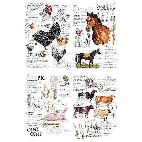 'FARM LIFE' TRANSFER