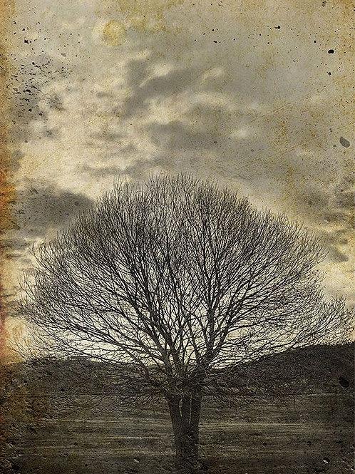 'SEPIA TREE' DECOUPAGE PAPER