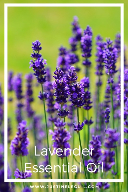 Organic Lavender Essential Oil - blog post