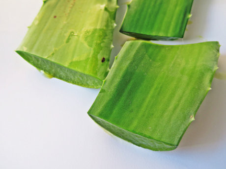 natural Aloe Vera Plant gel