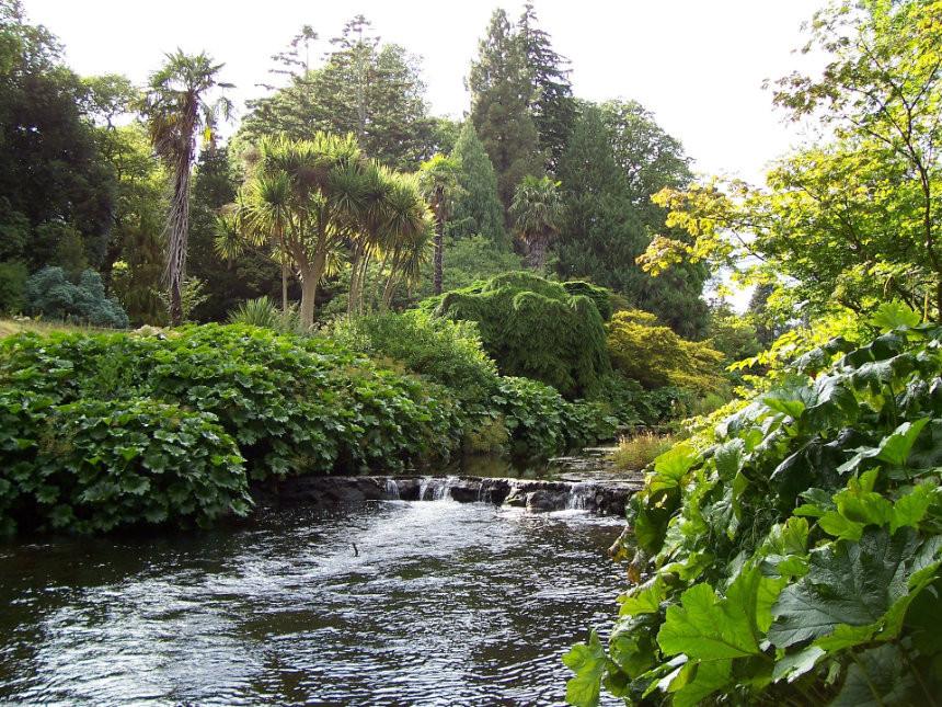 Wicklow Ireland green forest travel