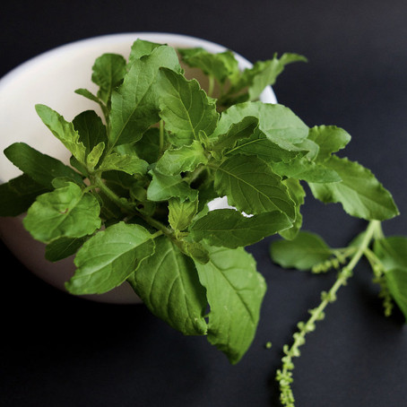 Tulsi Powder - What Is it?