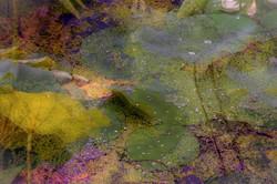 Lotus Garden / Edition