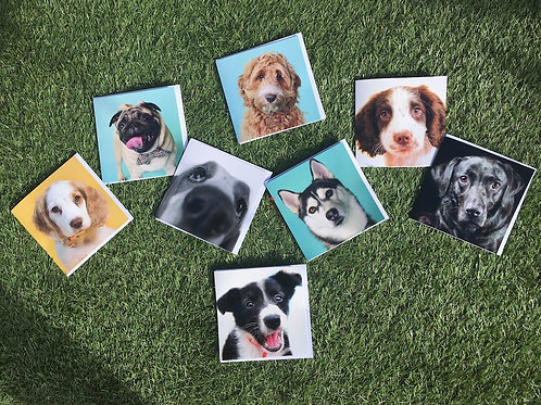 Doggy Greetings Cards