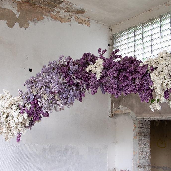 lilac installation