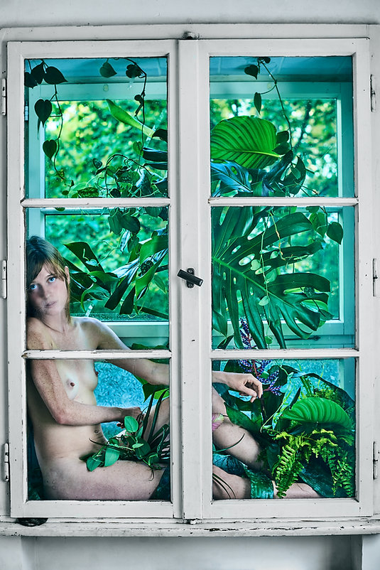 jungle window