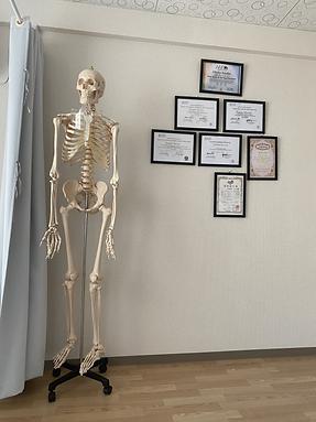 スタジオ内設置骨格標本の画像