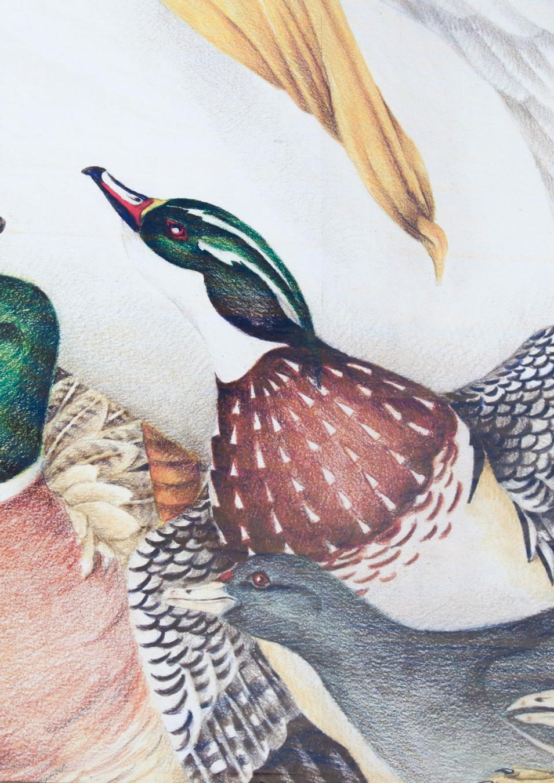 Wall #36 The Birds of University Lakes