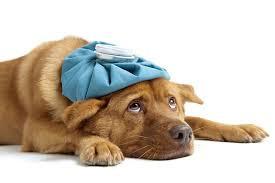 Nejčastější psí nemoci