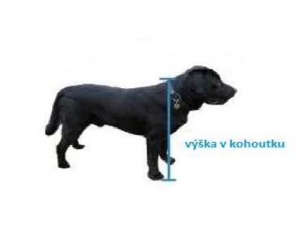 Velikost psí boudy dle plemena Vašeho psa