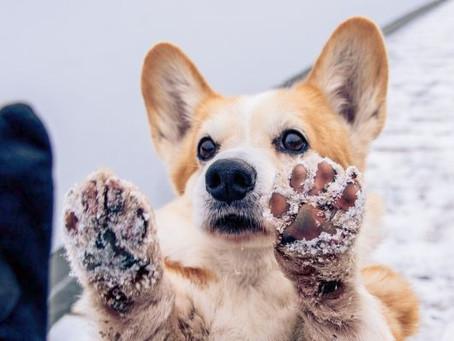 Zima a péče o psí tlapky