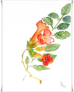 Blumen_2011007001.JPG