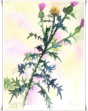 Blumen_2011009001.JPG