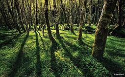 Trees:Shadows.jpg