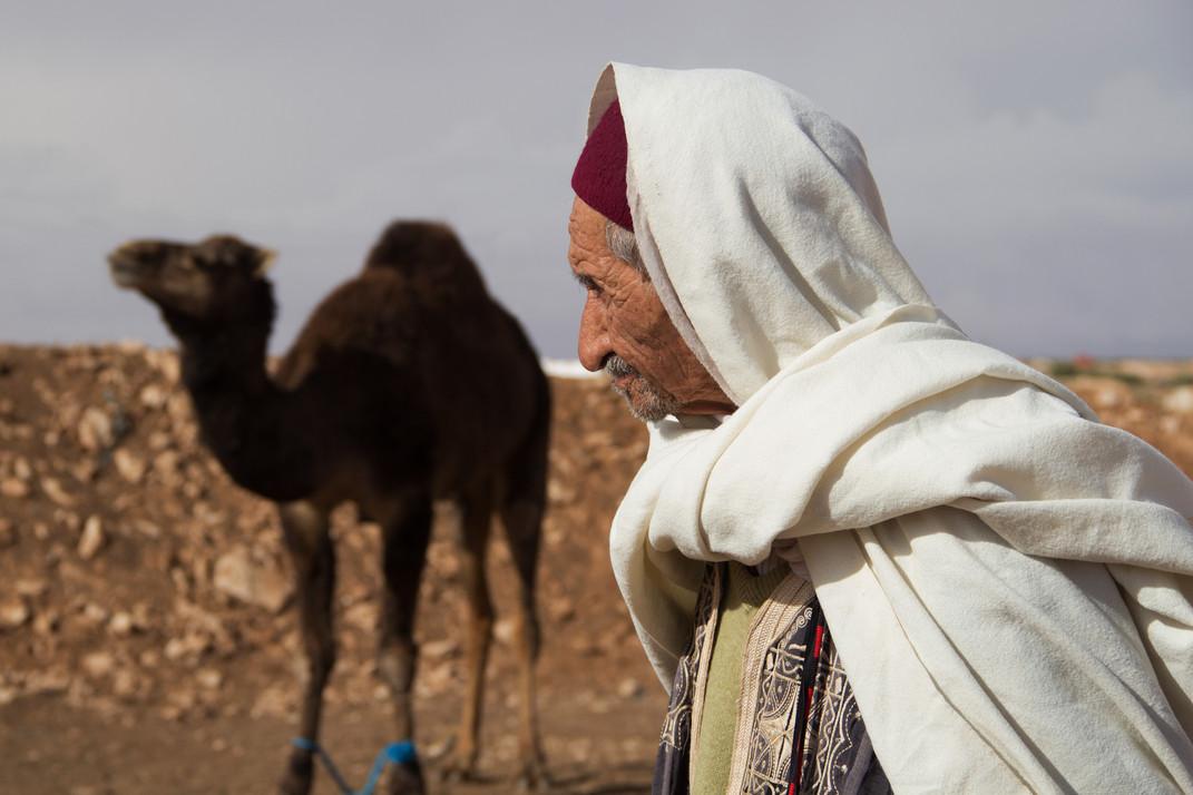 S3-19 camel breeder's pride.JPG