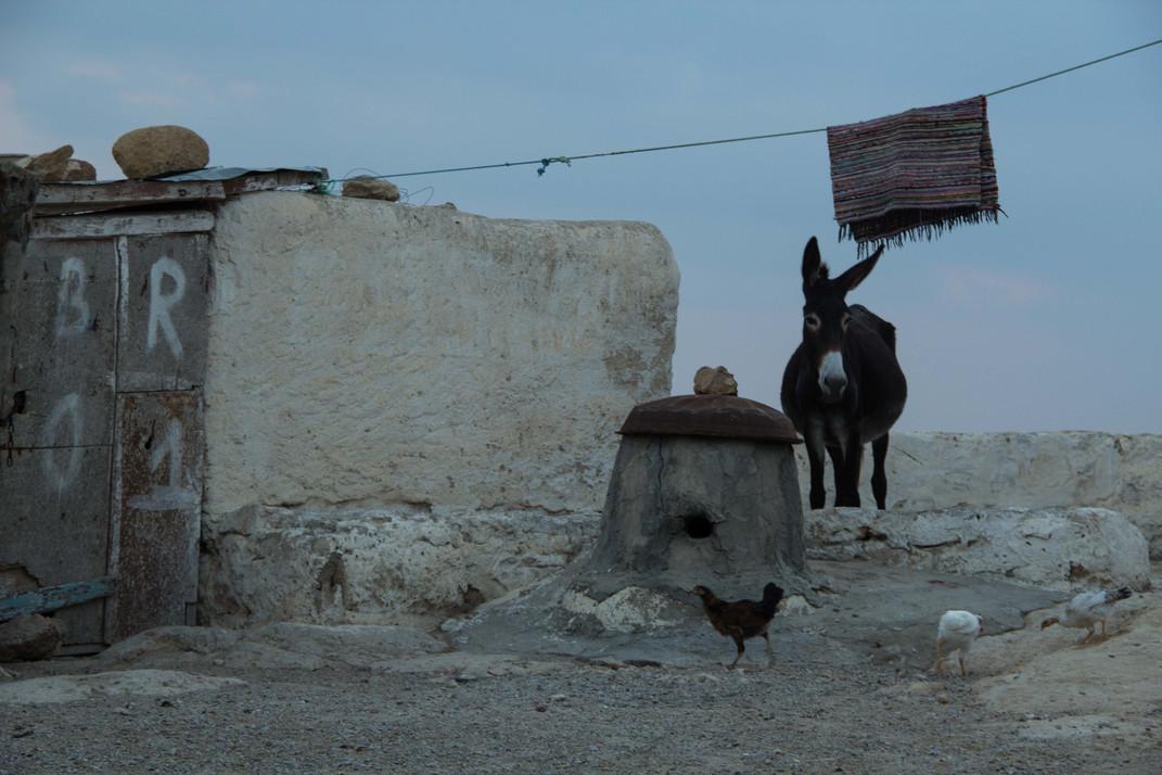Berber (1 von 1).jpg