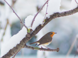 My new winter discovery - telephoto lens