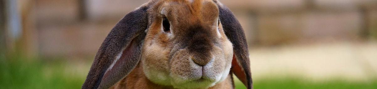 rabbit-1422882_1920.jpg