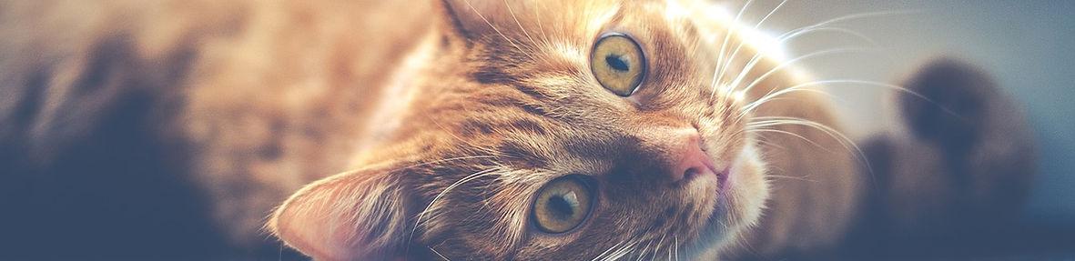 cat-1044914_1280.jpg
