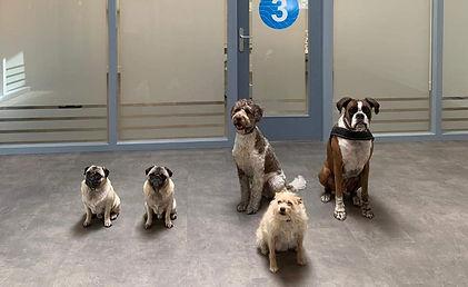 honden spreekkamer.jpg