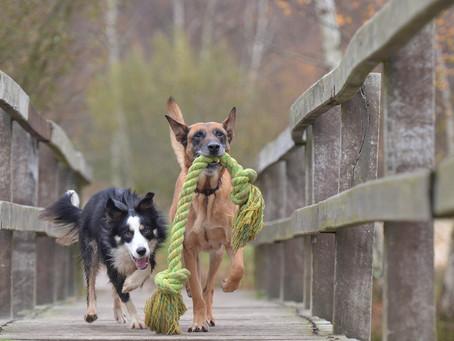 Hondenwandeling week van het geluk