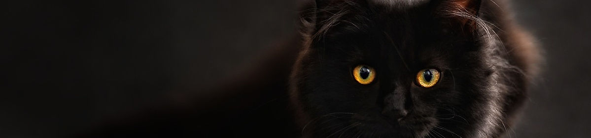 cat-694730_1280.jpg