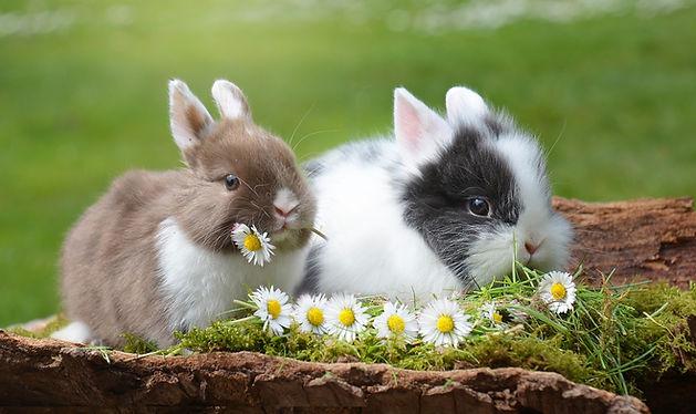 rabbit-2174679_1280.jpg
