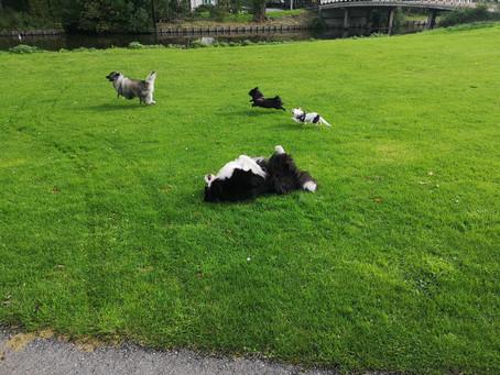 Volgende hondenwandeling