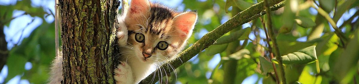 cat-1647775_1280.jpg